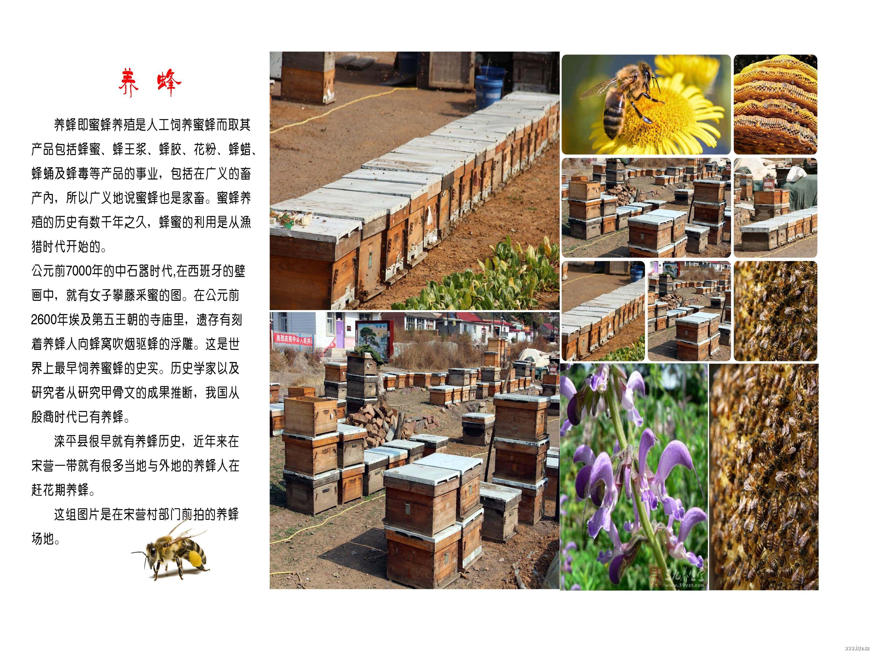 22养蜂.jpg