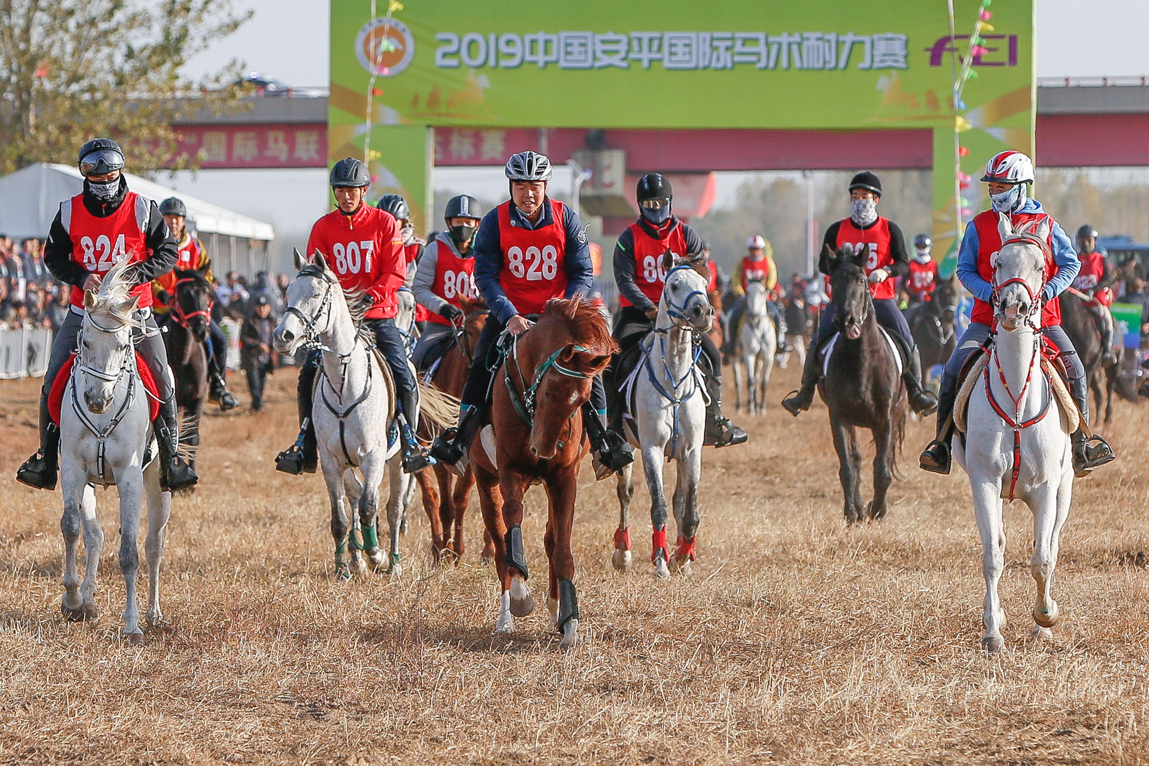 2019中国安平国际马术耐力赛举行促文体旅游业健康发展